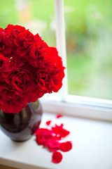 red roses in a clay vase naturally lit by window