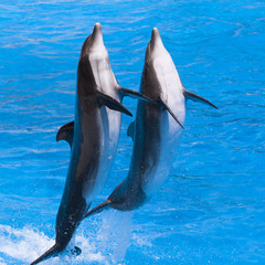 Dauphins sortant de l'eau