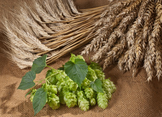 still life with hop cones
