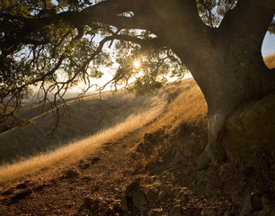 Sunny path under oak on idyllic hillside in Central California