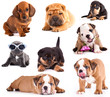 Puppies of different breeds