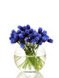 Muscari - hyacinth in vase isolated on white
