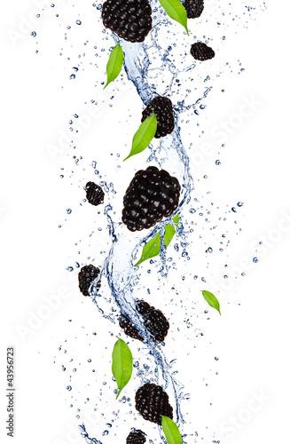 swieze-jezyny-objetych-w-splash-wody