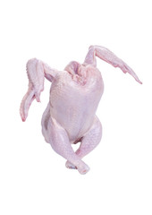 Dancing Raw Chicken