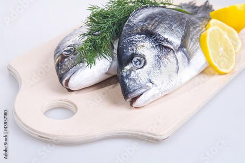Fototapeten,roh,fisch,gilthead,essen