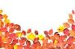 紅葉と落ち葉の彩 A