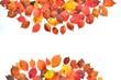 紅葉と落ち葉の彩 B