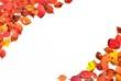 紅葉と落ち葉の彩 C