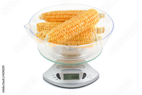 Cobs of corn weighed in the balance