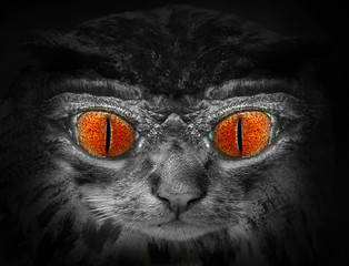 The Wildcat. Halloween nightmare.