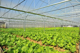 Vegetable Farm With Net To Keep Out Pests