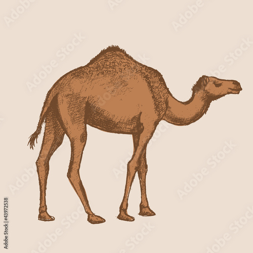 camel art drawing