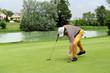 raccogliendo la palla da golf