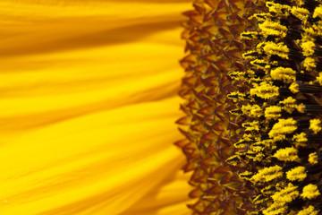 Blütenpollen Allergiker © Matthias Buehner