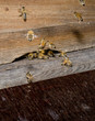 apiary entry closeup, busy summer day