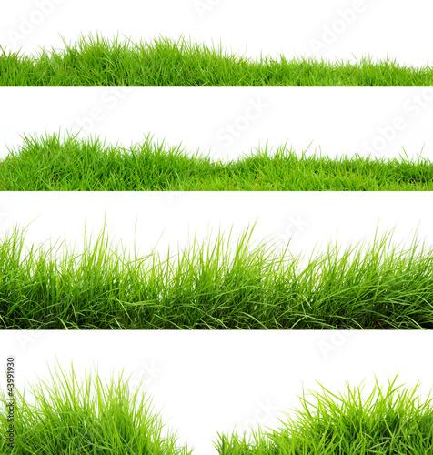 Leinwanddruck Bild Grass