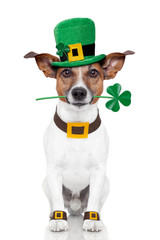 st. patrick's day dog