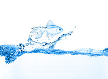 Gold fish przeskakując slash niebieskiej wody