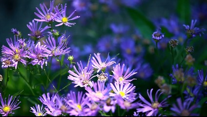 Blue flower on blured background