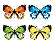 Vector illustration - Brightly coloured butterfly