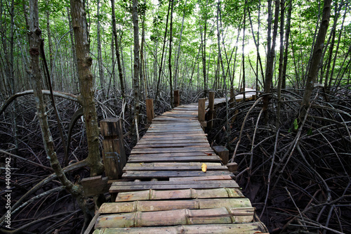 The wood bridge at the Mangrove forest, Thailand