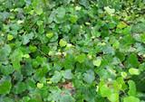 Green bright foliage, background