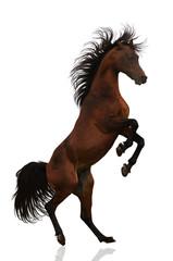 Acting Arabian stallion isolated
