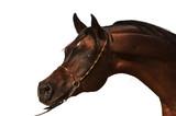 Purebred Arabian Horse isolated - 44021996