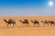 Fototapeten,wüste,kamel,karawane,düne