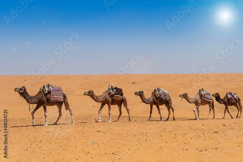 Fototapeten,wildnis,kamel,karawane,sanddünen
