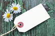 Blank Label with Daisies on a Green Wooden Background