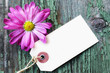 Blank Label with a Pink Flower on a Green Wooden Background