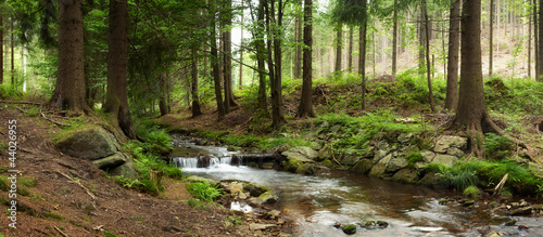 mountains river in forest - 44026955