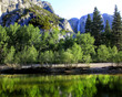 Merced River with Yosemite Falls in Background