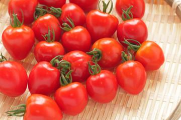 とれたてのミニトマト