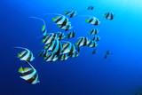 Fototapete Shoal - Schule - Fische