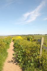 Coastal path at Morston Quay, North Norfolk