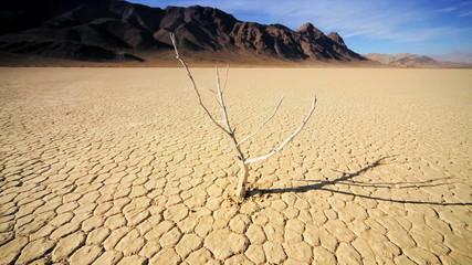 Dead Tree Barren Desert Landscape