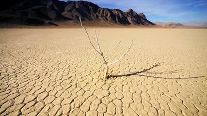 Petrified Tree Desert Landscape