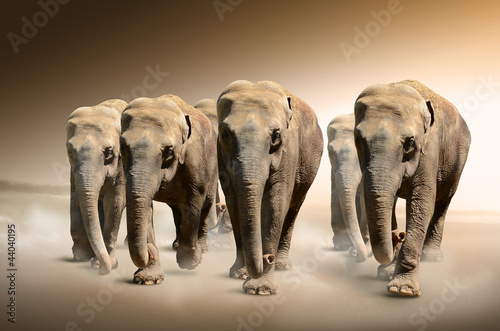 Fototapety, obrazy : Herd of elephants