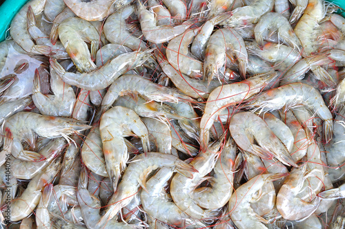 Shrimps  The fish market