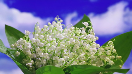 Lily of the valley bouquet rotating on sky background