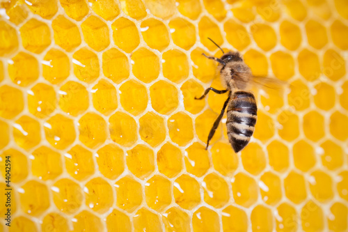 bee in honeycomb macro