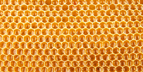 honeycomb full of honey closeup