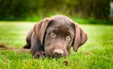Fototapete Hübsch - Hund - Haustiere