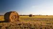 Bale field