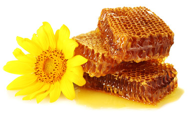 sweet honeycombs with honey and sunflower, isolated on white