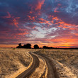 path in steppe on sunset