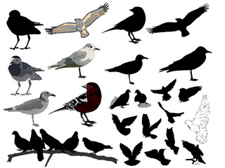 Set of 24 (twenty four) birds and silhouettes of birds