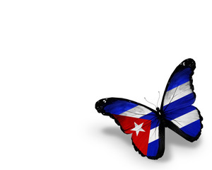Cuban flag butterfly, isolated on white background